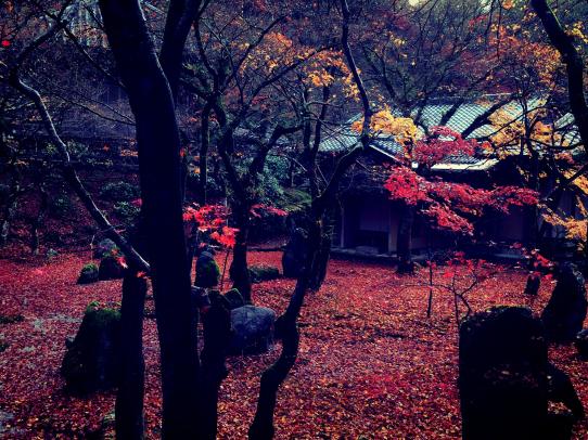 koumyouzenji_141126_2