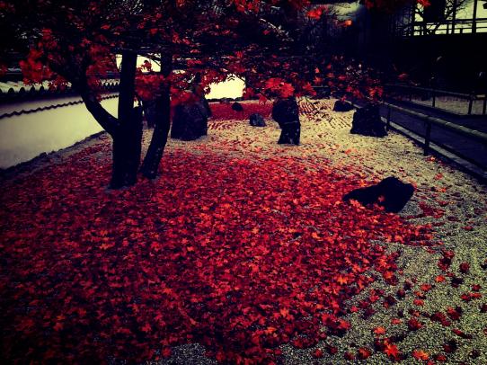 koumyouzenji_141126_5