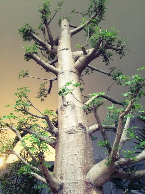 plant_gringrin_10