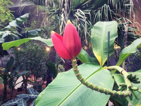 plant_gringrin_13
