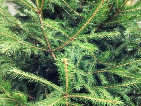 plant_gringrin_20