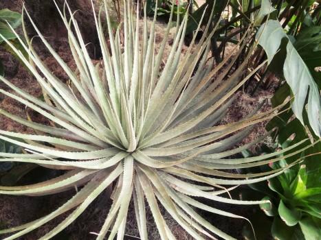plant_gringrin_25