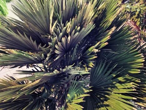 plant_gringrin_4