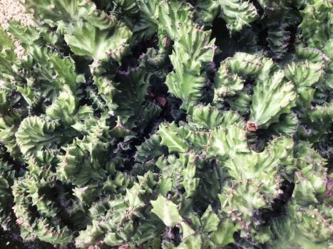 plant_gringrin_8