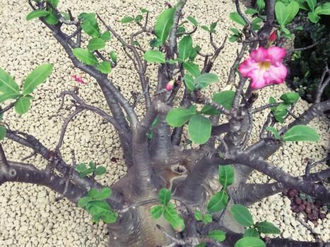 plant_gringrin_9