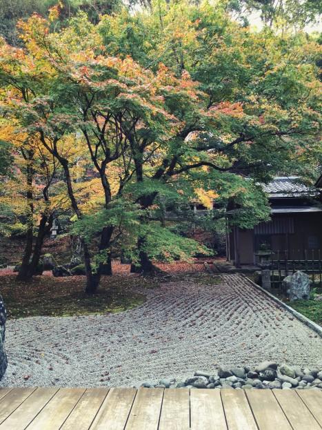 koumyouzenji_151111_5