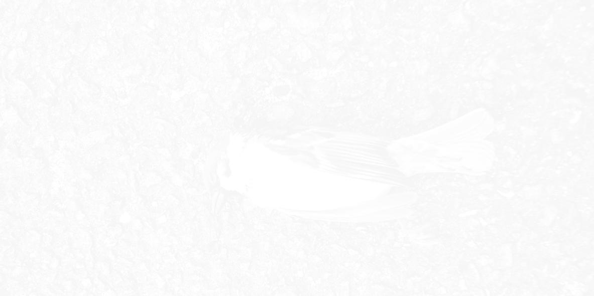 monochrome-no-0008090811